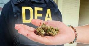 """DEA Say's """"NO"""" To Marijuana"""